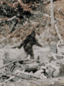 patterson-bigfoot-stabilized